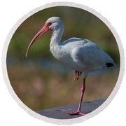 White Ibis Round Beach Towel