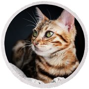 Bengal Cat Portrait Round Beach Towel