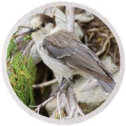 Camprobber - The Gray Jay Round Beach Towel