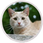 Orange Tabby  Round Beach Towel