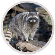 Round Beach Towel featuring the photograph Raccoon by Ross G Strachan