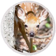 White-tailed Deer Fawn, Animal Portrait Round Beach Towel