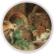 Round Beach Towel featuring the painting A Mother Rabbit And Her Young by Alfred Richardson Barber