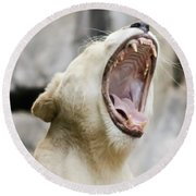A Portrait Of A White Southern African Lion Female Roaring Round Beach Towel