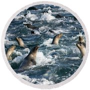 A Raft Of Sea Lions Round Beach Towel