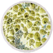 A Seashell Abstract Round Beach Towel