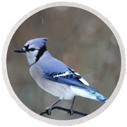 A Snowy Day With Blue Jay Round Beach Towel