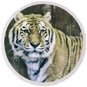 A Tigers Look Round Beach Towel