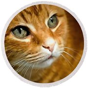 Adorable Ginger Tabby Cat Posing Round Beach Towel