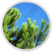 Adriatic Pine Against Blue Sky  Round Beach Towel