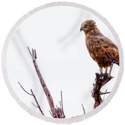 Round Beach Towel featuring the photograph African Crowned Eagle by Kay Brewer