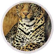 African Leopard Portrait Wildlife Rescue Round Beach Towel
