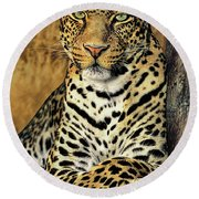 African Leopard Portrait Wildlife Rescue Round Beach Towel