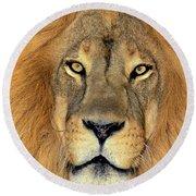 African Lion Portrait Wildlife Rescue Round Beach Towel