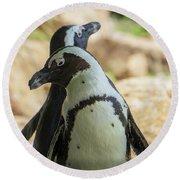 African Penguins Posing Round Beach Towel