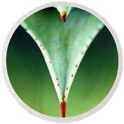 Aloe Thorn And Leaf Macro Round Beach Towel