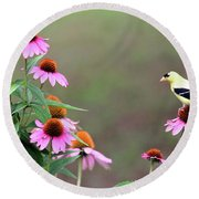 American Goldfinch On The Coneflowers Round Beach Towel