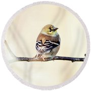 Round Beach Towel featuring the photograph American Goldfinch by Sue Collura