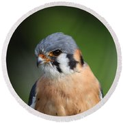 Round Beach Towel featuring the photograph American Kestrel 5151801 by Rick Veldman