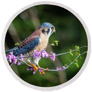 Round Beach Towel featuring the photograph American Kestrel 5151804 by Rick Veldman