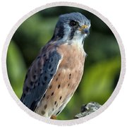 Round Beach Towel featuring the photograph American Kestrel 9251501 by Rick Veldman