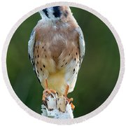 Round Beach Towel featuring the photograph American Kestrel 9251502 by Rick Veldman