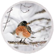 American Robin In The Snow Round Beach Towel