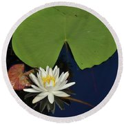 American Water Lily-square Round Beach Towel