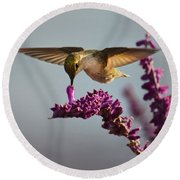 Anna's Hummingbird Sipping Nectar From Salvia Flower Round Beach Towel
