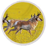Antelope Running Thru The Wildflowers Round Beach Towel