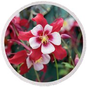Aquilegia Swan Red And White Flower Round Beach Towel