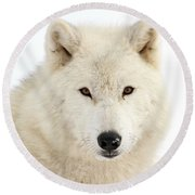 Arctic Wolf Close Up Round Beach Towel