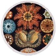 Ascidiae, Plate 85 From Kunstformen Der Natur Round Beach Towel