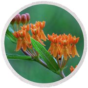 Round Beach Towel featuring the photograph Asclepias Tuberosa by Dale Kincaid