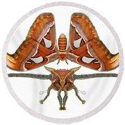 Atlas Moth5 Round Beach Towel
