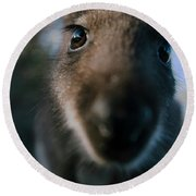 Australian Bush Wallaby Outside During The Day. Round Beach Towel