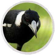 Australian Magpie Outdoors Round Beach Towel
