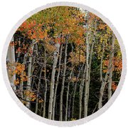 Round Beach Towel featuring the photograph Autumn As The Seasons Change by James BO Insogna