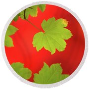 Round Beach Towel featuring the photograph Autumn by Bob Cournoyer