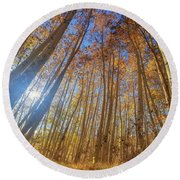 Round Beach Towel featuring the photograph Autumn Giants by Tassanee Angiolillo