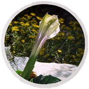Round Beach Towel featuring the photograph Awakening - Sacred Datura by Judy Kennedy