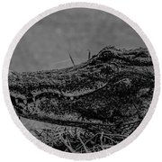 B And W Gator Round Beach Towel