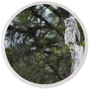 Round Beach Towel featuring the photograph B17 by Joshua Able's Wildlife
