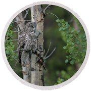 Round Beach Towel featuring the photograph B18 by Joshua Able's Wildlife
