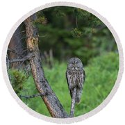 Round Beach Towel featuring the photograph B20 by Joshua Able's Wildlife