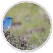 Round Beach Towel featuring the photograph B23 by Joshua Able's Wildlife