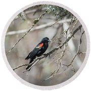Round Beach Towel featuring the photograph B26 by Joshua Able's Wildlife