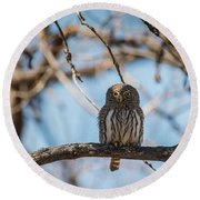 Round Beach Towel featuring the photograph B34 by Joshua Able's Wildlife