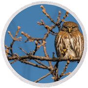 Round Beach Towel featuring the photograph B37 by Joshua Able's Wildlife