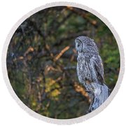 Round Beach Towel featuring the photograph B46 by Joshua Able's Wildlife